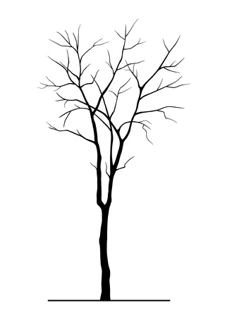 dead tree: Tree Silhouette without Leaves Illustration