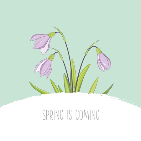 Spring flowers card with snowdrops Vector