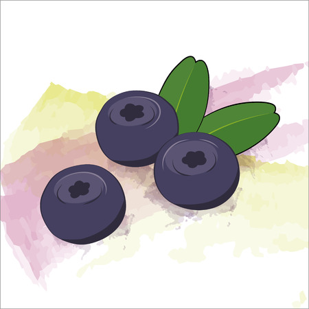 blueberries: Vector blueberries on watercolor background Illustration