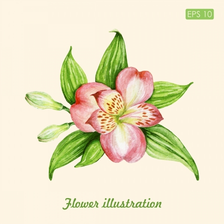 watercolor floral illustration Illustration