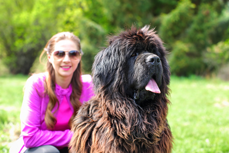 Huge Newfoundland dog (detail on head) with blurred woman in pink, and green park in background.