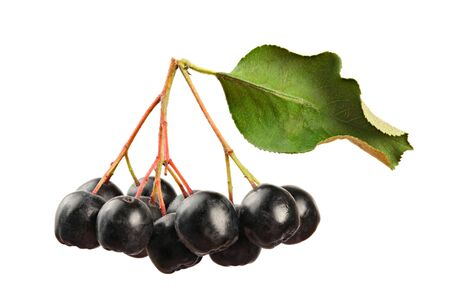 Aronia (Chokeberry) fruits with stems and leaf, isolated on white background, close up detail.