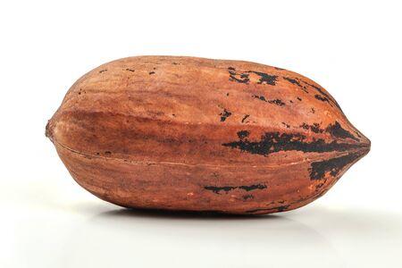 Single whole pecan (Carya illinoinensis) nut in shell, isolated on white background. Close up photo.