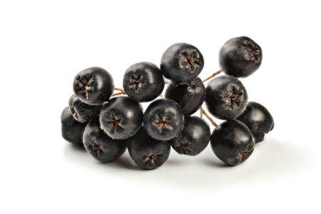 Details zu Aronia (Aronia) Früchten mit Stiel, isoliert auf weißem Hintergrund Standard-Bild