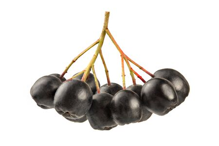 Aronia (Chokeberry) berries and stem, isolated on white background.