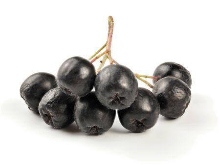 Aronia (chokeberry) fruits on stem, isolated on white background.