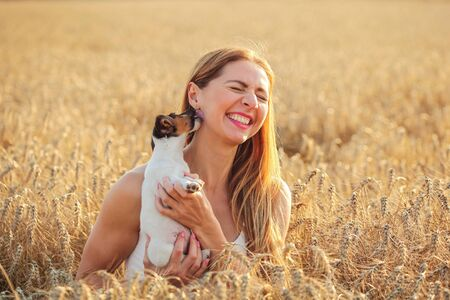 Young woman in wheat field, lit by afternoon sun, trying to pose with Jack Russell terrier puppy, but she is playing and licking her ear. 免版税图像