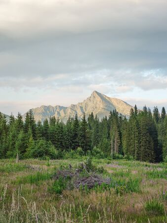Forest meadow, trees and mount Krivan peak Slovak symbol in distance, lit by summer evening sun