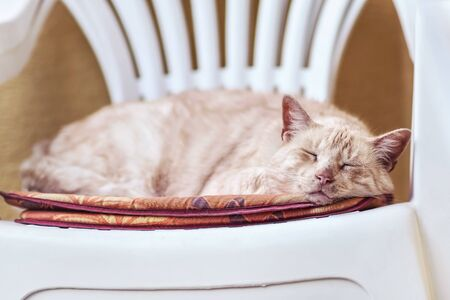 Light brown beige coloured cat sleeping on white plastic chair, shallow depth of field photo for dreamy effect.