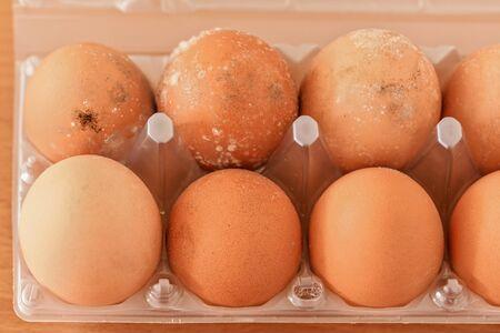 Mildew growing on eggs stored improperly in wet fridge for long time.