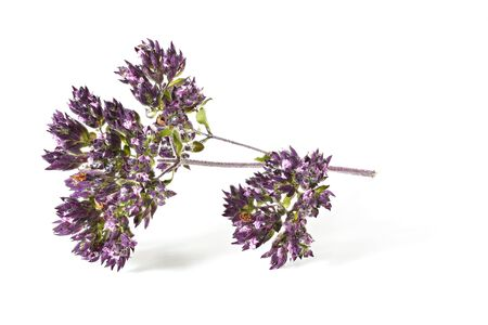 Oregano - Origanum vulgare - aka. sweet wild marjoram leaves and flowers dried, isolated on white background.