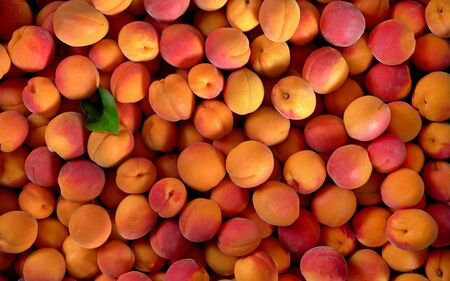 Heap of apricots and one green leaf, view from above.