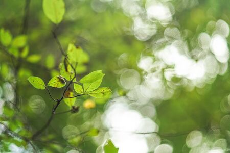Leaves on a tree branch with nice blurred bokeh - shallow depth of field photo, only leaf in focus, can be used as abstract nature background. Banco de Imagens