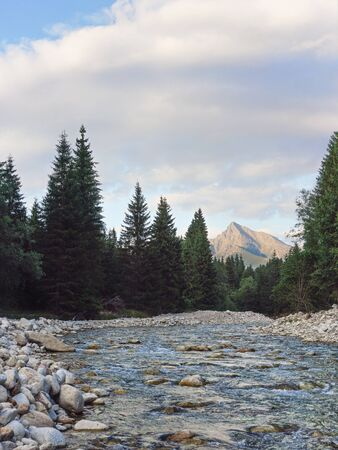 Small forest river, coniferous trees and round stones on both sides, evening sun shines on mount Krivan Slovak symbol in distance.
