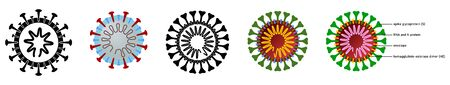Coronavirus (covid-19 disease) drawing with structure explained, black, white and colour versions