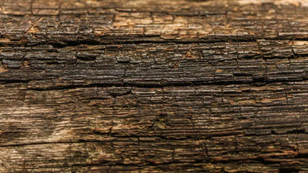 Old wood (sun shining to board on wooden bench) structure. Abstract natural background. Reklamní fotografie