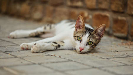 Stray cat lying on the ground, head slightly up, curious looking into camera, mesmerising eyes.