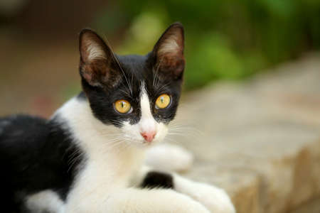 Small black and white stray cat with mesmerizing yellow eyes, laying on pavement curb, looking into camera.