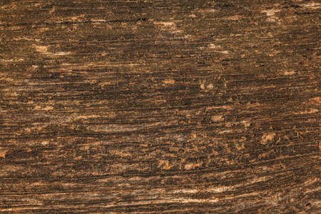 Texture on old wooden bench board lit by sun. Natural vintage wood background.