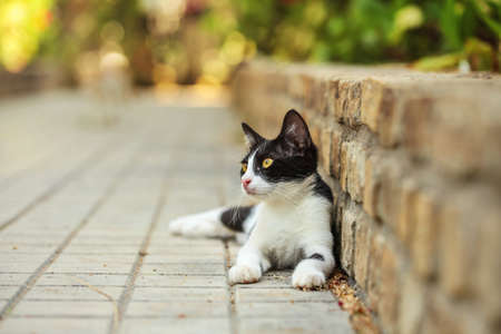 Black and white stray cat laying at pavement curb, sun lit park in distance. 免版税图像