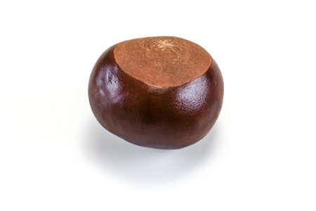Horse chestnut (Aesculus hippocastanum) fruit isolated on white background