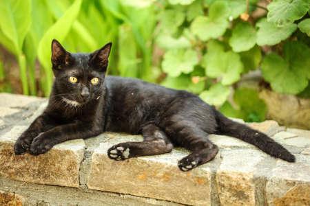 Dirty black stray cat resting on pavement curb, green plants in background. 版權商用圖片