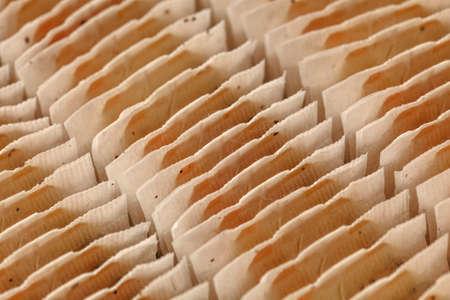 Closeup of teabags neatly arranged in box. 版權商用圖片