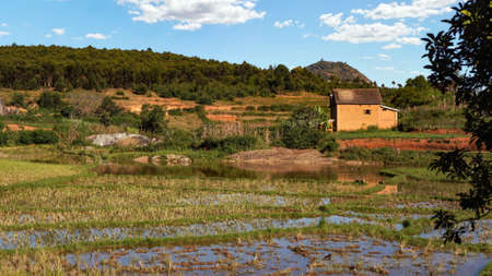 Typical scenery during sunny day near Ankafina-Tsarafidy region, houses on small hills background, wet rice fields in foreground