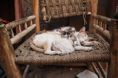Three white stray cats resting on wicker chair cuddle together Stock fotó