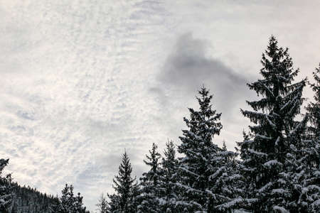 Coniferous tree tops covered with snow, small clouds sky (space for text) in background Stock fotó