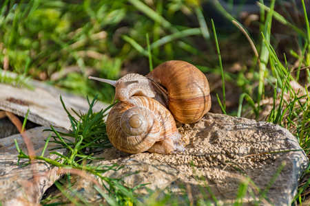 head stones: Snails climbing on the rock in the green grass Stock Photo