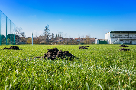 Many molehills / mole mounds on football (soccer) field