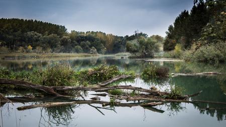 danube: Floodplain, river Danube, Slovakia