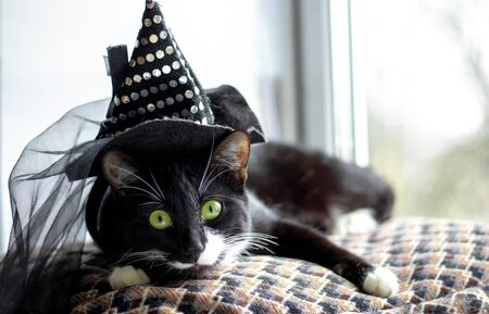 Black cat with witch hat for halloween. isolated on white background. 版權商用圖片