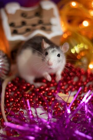 New year. Christmas.The symbol of the new year 2020 is a rat.Fun and celebration