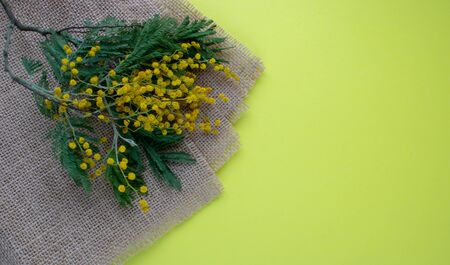 Rustic brown burlap cloth and branch Mimosa isolated on yellow background. 写真素材