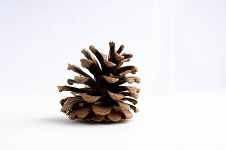 dry open pine cone isolated on a white background
