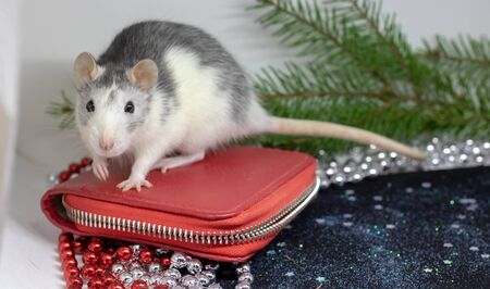 The symbol of the outgoing year 2020 is a white or metallic silver rat. A cute rat sits on a red purse-a symbol of wealth. Funny Christmas animal, funny pet-rat. Chinese zodiac, Eastern horoscope.