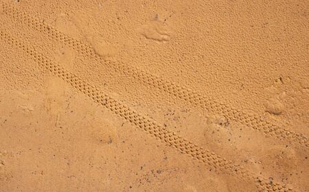 Bicycle tire tracks in the wet sand.