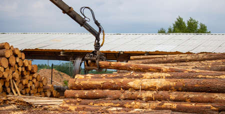 Logging, sawmill. Manipulator for loading wood. The loader of boards and logs works against the background of a stormy sky 版權商用圖片
