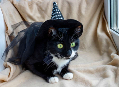 Funny black cat in a fancy dress, in a witch's hat. Stock Photo