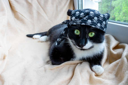 Funny black cat in a fancy dress, in a pirate bandana lies and looks at the camera.