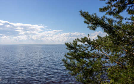 Evergreen pines with views of the blue sea and sky with clouds.