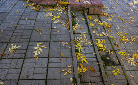 The front porch steps with yellow leaves of the ash. Archivio Fotografico