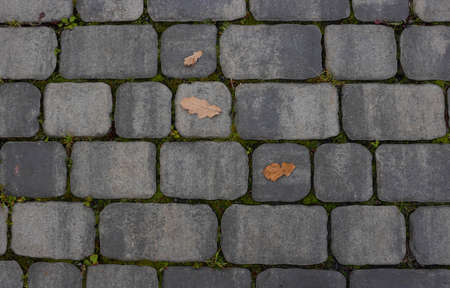 Fallen leaves with water drops on the sidewalk, top view. Blocks of the sidewalk pattern, details of the stone-lined path. 免版税图像