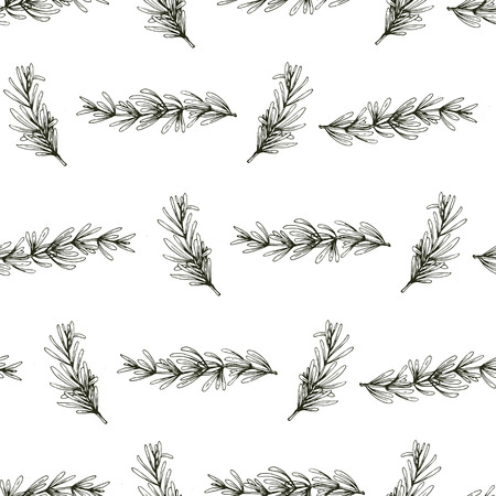 Seamless vector pattern with hand drawn rosemary, herbs background.