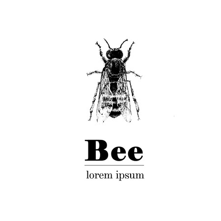 inteligent: Vector hand drawn illustration of bee. Vintage style. Illustration