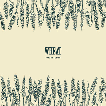 wheat grain: Field of Wheat vector illustration, ideal for bread packaging, beer labels Illustration