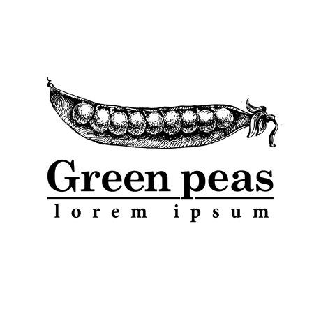 legume: Vegetable from the garden. Organic food. Vector illustration
