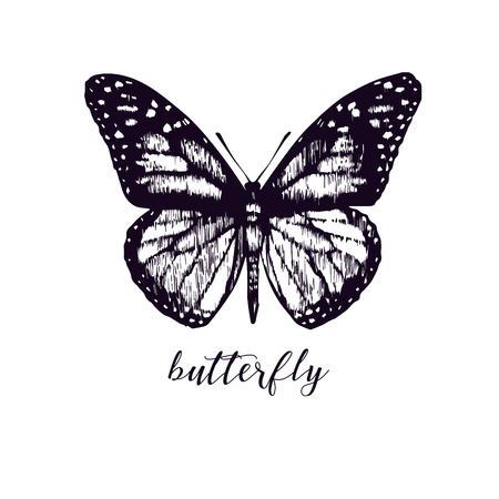 batterfly: Vector butterfly. Hand drawn vintage picture. Illustration